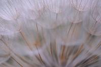 Macro Flower Picture