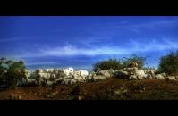 Casentino pastures
