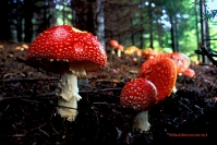 Mushrooms - Casentino Forest