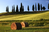 Hay bale and cypress trees at Poggio ai Frati