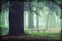 Park Arezzo