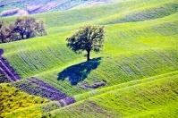 Tuscany - Siena countryside - Crete Senesi