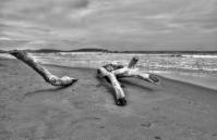 Maremma coast - Timewinds