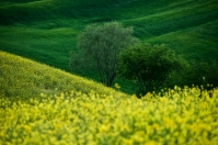 Tuscany countryside in bloom