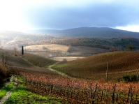 Tuscany rainy fields