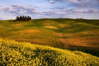 Field of the Orcia countryside in Tusxcany