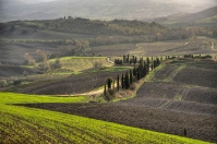 Green fields in Orcia - Siena countryside