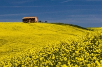 Orcia countryside in bloom