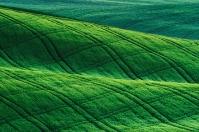 Orcia Landscape