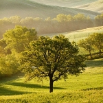 Trees in the Tuscan countryside