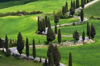 Tuscany cypresses near Monticello Orcia
