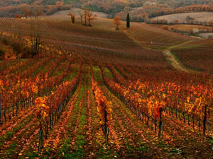 Chianti vineyards - Tuscany countryside